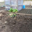Get an allotment   If you are interesting in a bit of gardening and growing healthy fruit and veg then there is still time to get yourself an allotment or even...