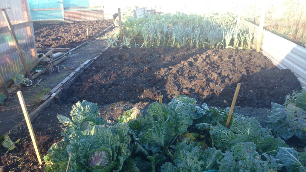 winter veg growing in Kelty Allotments